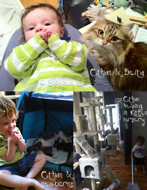 Pictures of our kids with the cats