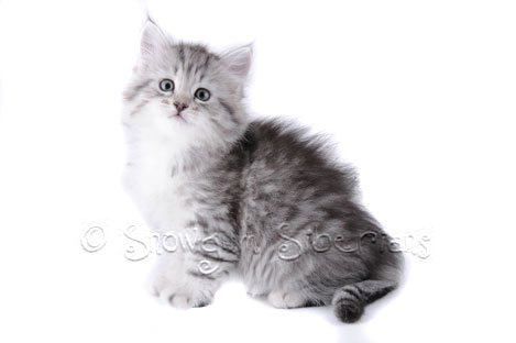 broward county pet adoption